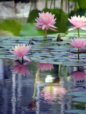 No mud, no lotus - Thich Nat Hahn