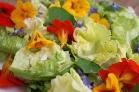 saladsmallercopy